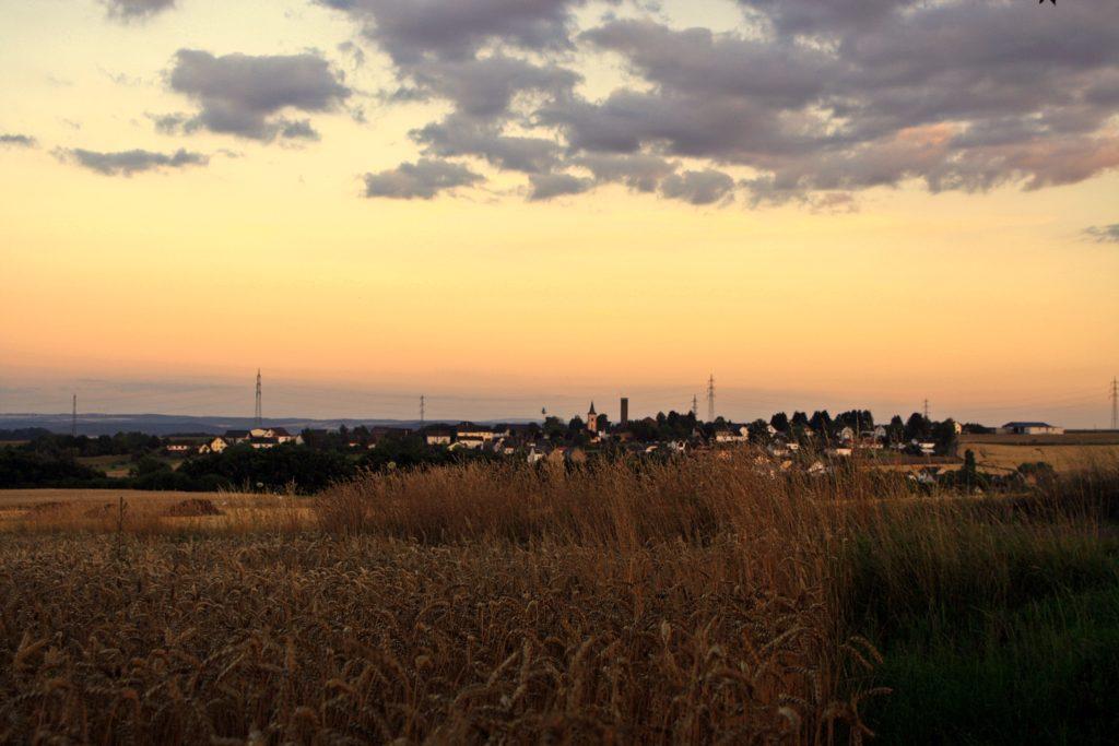 Forst im Sonnenuntergang